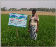 Mr. Sobhan Boyati in his field of salt tolerant rice