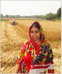 Taslima – pleased with the labor and time savings of a wheat reaper