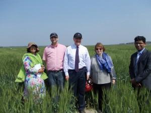 US Amb Wheat field