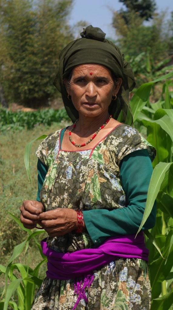 Nepali woman farmer in her maize field