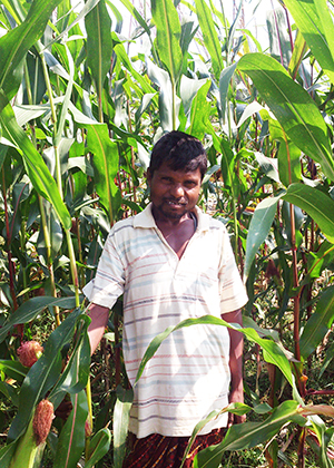 Cereal Systems Initiative for South Asia (CSISA) » Odisha
