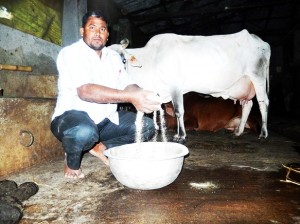Dairy  feed businessman