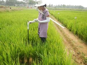 Ipsita Kar wants to help overcome poverty through rice science.