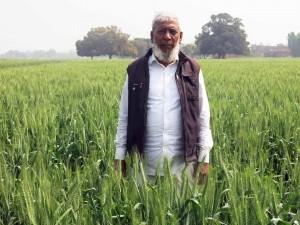 Farmer Afaq Ahmad on his zero till wheat field. Photo: Ajay Pundir/CIMMYT.