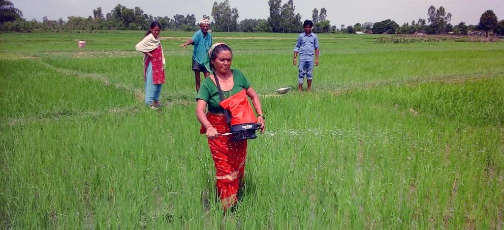 Bardiya Earthway Spreader
