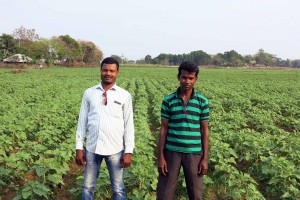 Farmer Pradeep Kumar (left) on his line sown sunflower field. Photo: Ashwamegh Banerjee/CIMMYT.